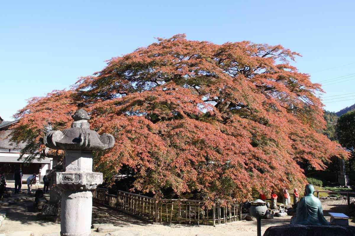 札所八番・西善寺(横瀬町 ...
