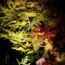 寶登山神社 01