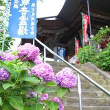 札所3番常泉寺アジサイ