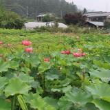 0705arakawa_hanahasu (1)s