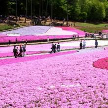 芝桜の丘 07
