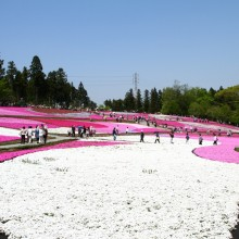 芝桜の丘 04