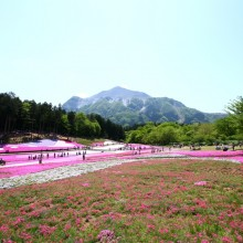 芝桜の丘 05