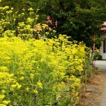 秋の七草 05