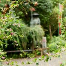 秋の七草 11