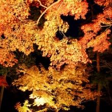 長瀞紅葉 月の石もみじ公園 ライトアップ