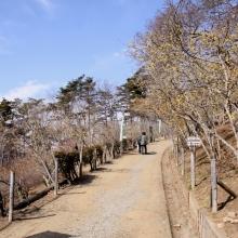 ロウバイ園 梅園02