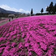 芝桜の丘 03