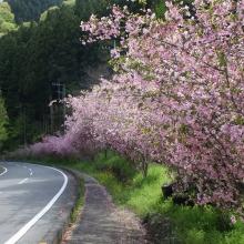 上吉田カイドウ街道