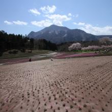 芝桜の丘 01