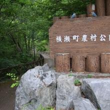 横瀬町農村公園アジサイ