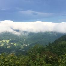 美の山アジサイと雲海の画像