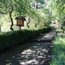 秋の七草めぐり撫子の画像