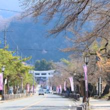 宝登山参道の桜の画像