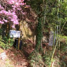 瑞岩寺 岩ツツジの画像
