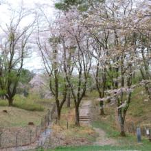 長瀞野土山の画像