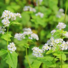荒川そばの花の画像