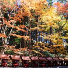 奥秩父紅葉 三峯神社の画像