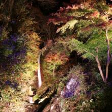 秩父華厳の滝ヒーリングナイトの画像