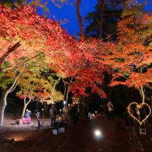 月の石もみじ公園紅葉ライトアップ