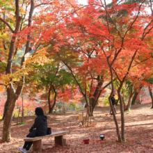 長瀞紅葉 月の石もみじ公園の画像