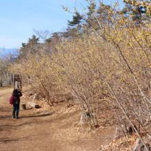 四季の丘ロウバイの画像