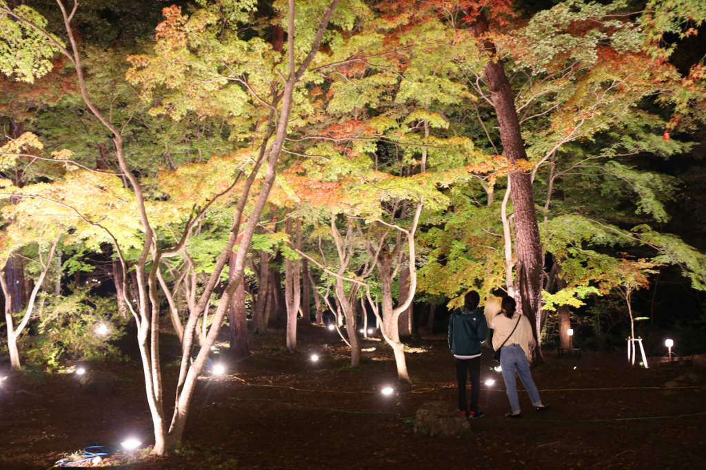 長瀞紅葉ライトアップの画像
