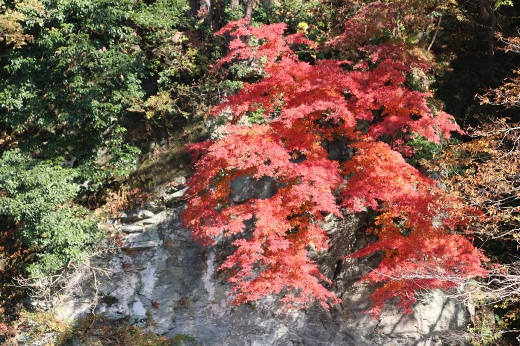 長瀞岩畳周辺紅葉の画像