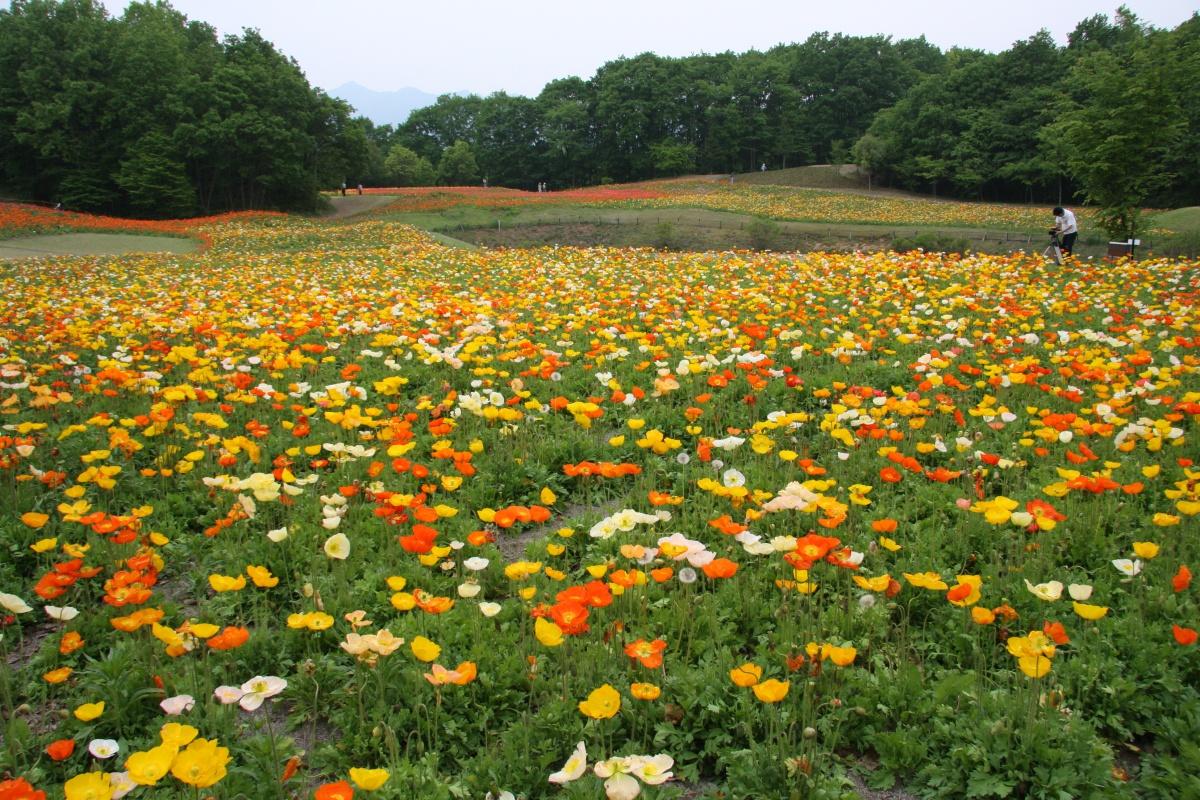 ミューズパーク花の回廊