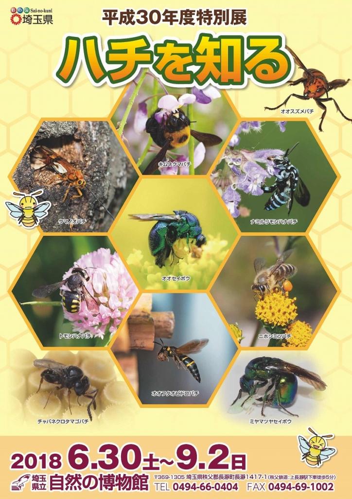 特別展「ハチを知る」開催