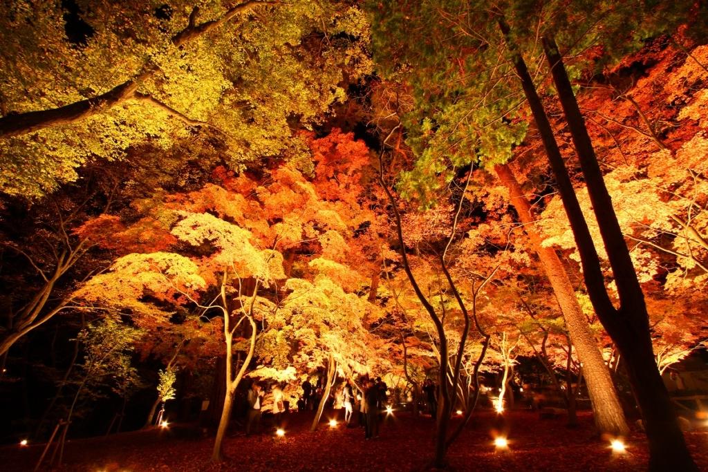 月の石もみじ公園紅葉ライトアップの画像
