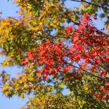 寶登山神社紅葉03