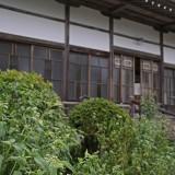 藤袴_02