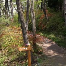 美の山公園・ヤマツツジ