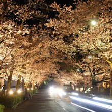 北桜通りライトアップ