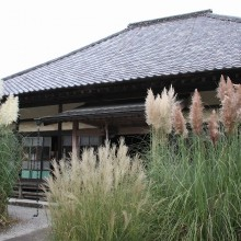 秋の七草寺_尾花