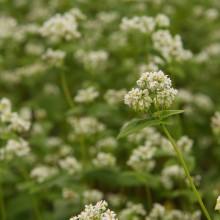 荒川そばの花見まつり