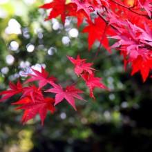 秩父華厳の滝紅葉