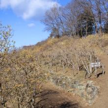宝登山・西ロウバイ園