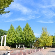 秩父ミューズパーク銀杏並木の画像