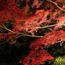 寶登山神社紅葉ライトアップ