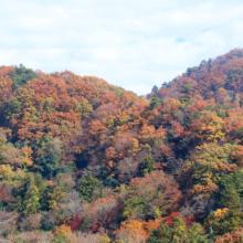 長瀞紅葉 岩畳周辺の画像