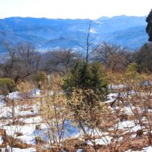 宝登山山頂四季の丘