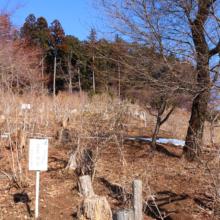 宝登山四季の丘の画像