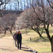 秩父ミューズパーク梅園の画像