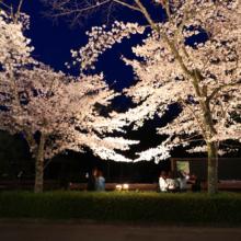 長瀞北桜通りライトアップ