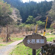 水芭蕉園の画像