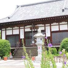 多宝寺桔梗の画像