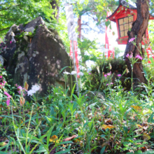 長瀞秋の七草寺撫子の画像