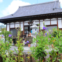 長瀞秋の七草寺桔梗の画像